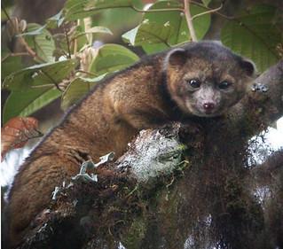 Ecuador mammal