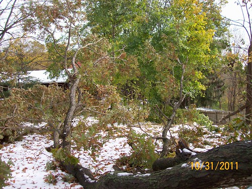 downed trees in yard from sandy