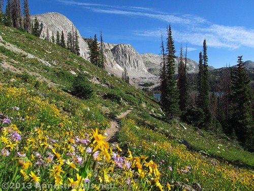 Wildflowers near the beginning of the trail, not far from Lake Marie, Snowy Range, Medicine Bow National Forest, WY