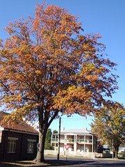 Blayney New South Wales. Street trees in autumn.