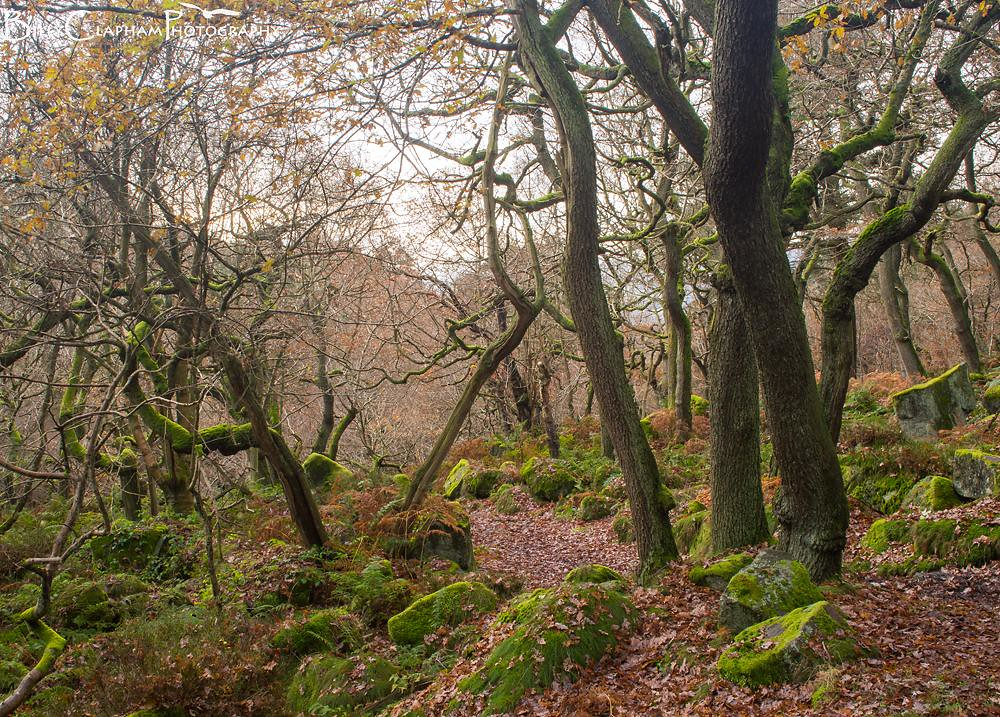Ancient oak woodland in autumn, landscape photography by billy clapham, Padley Gorge, Peak district