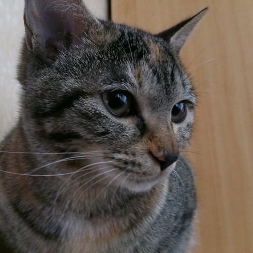 ファニーフェイスだった保護猫のカトル。だんだんフツーに可愛い顔になってきた by Chinobu