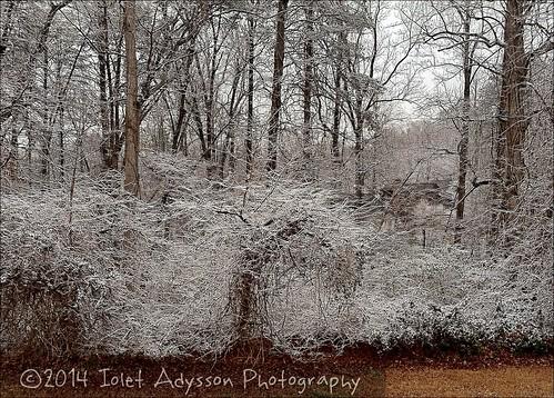 snow photographer southcarolina greenvillesc upstatesc winter2014 uploaded:by=flickrmobile flickriosapp:filter=nofilter joeandlisadean february2014 yeahthatgreenville