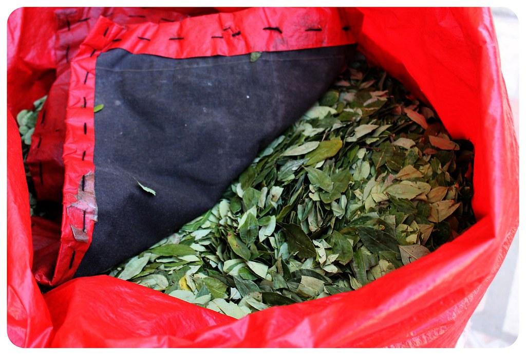 potosi coca leaves