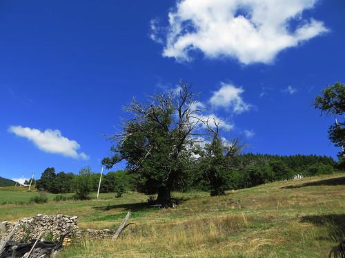 20130820 12 189 Jakobus Wolken Baum  Wiese