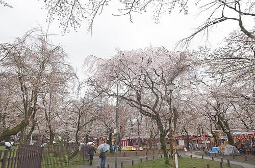 【写真】2014 桜 : 平野神社/2020-06-29/IMGP5556