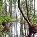 Swamp in the Morning Mist by TimothyJ