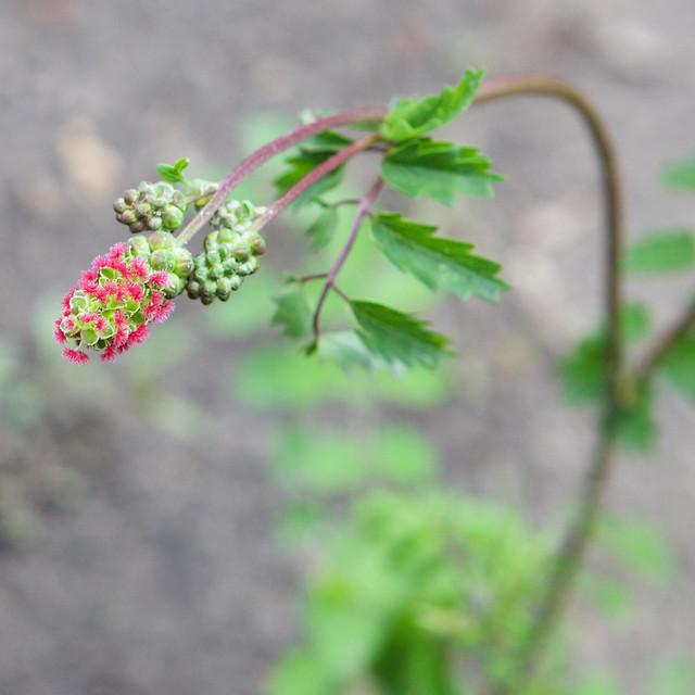 unknown little flower. Botanical garden. Lviv, Ukraine