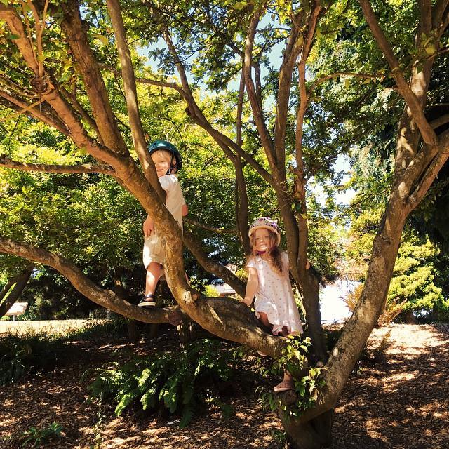 Tree Climbing #100DaysofSummer2015