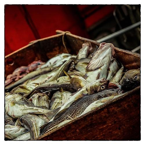 Fischkasten