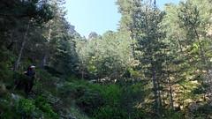Entre la cascade du contournement et la confluence avec le ruisseau des Calanche