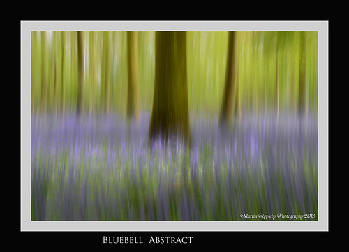 Bluebell Abstract.