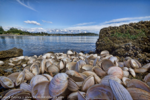 Shells on the Shore by Mark Pouley