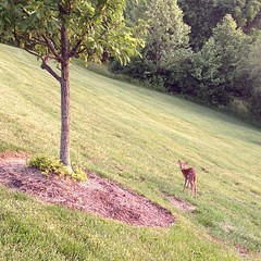 Tiniest. Deer. Ever!
