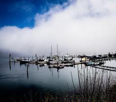 Fog in Northeast Harbor