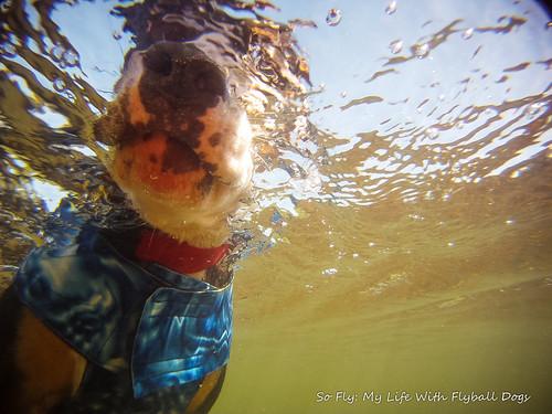 GoPro Under Water-6081