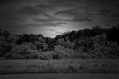 trees summer bw monochrome clouds manipulation northreading ipswichriverpark