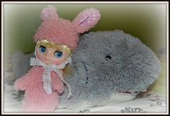 Buttercup - Nellie Nibbles
