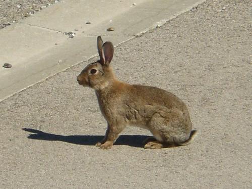 toujours par là, le lapin (série) by Claudie K