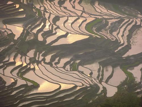 Yunnan13-Yuanyang 24-Bada (52)1