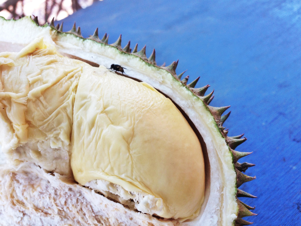 1 day durian tour in malaysia with diamond tour
