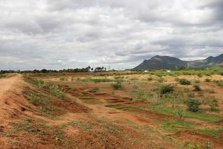 A dried up Thoppampatti Kanmai in Dindigul district, Tamil Nadu (September, 2013)