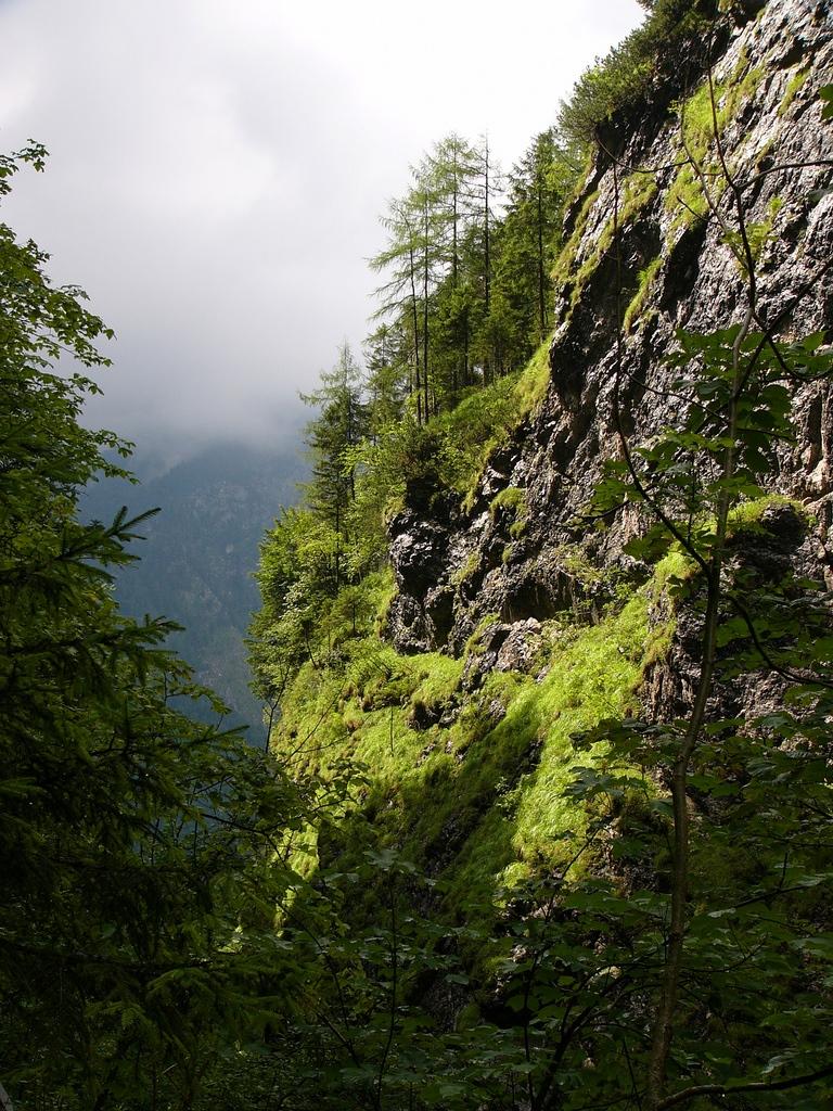 16. Bosque, rocas y nubes. Autor, José Kroezen