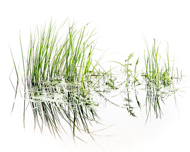 reflections of grass