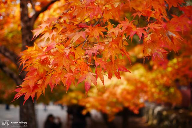 Panasonic_GX7_Kyoto_24