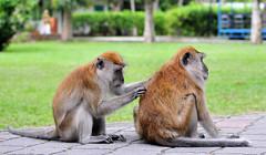 monkeys 07