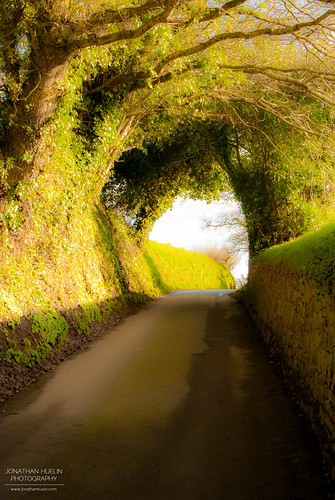 road green nature nikon country lane stlawrence jerseychannelislands d3000