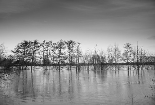 Thames Flooding at Little Wittenham