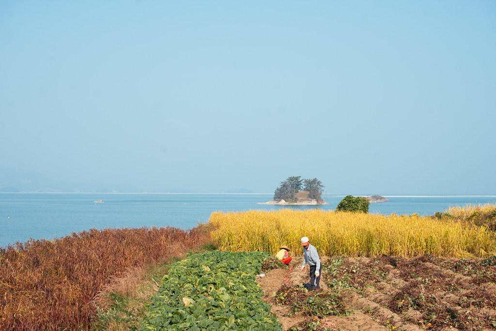 Namhae farmers