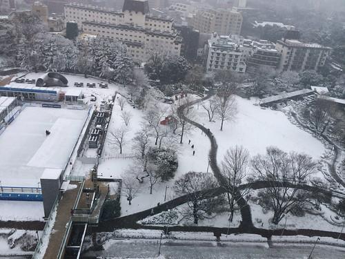 2014年2月14日の雪 - 12時ごろ