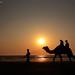 Camel ride... an evening at beach side by Shridev Parikh