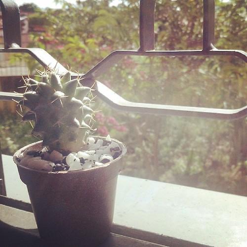 #bomdia ! Acho que meu mini cacto deu uma crescida! rsrs #cabidecharmoso #minhasinspirações