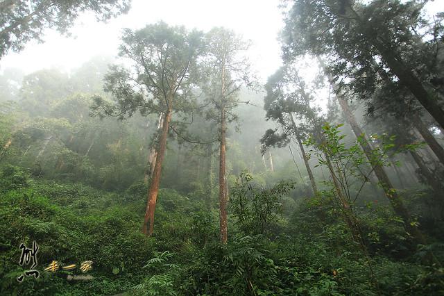 [嘉義奮起湖石棹景點]龍雲休閒農場森林步道~鐵達尼石-五彩石我來了