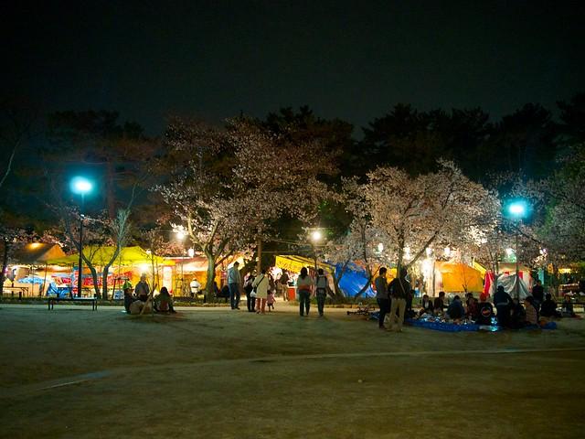 140329_NightSakura 3