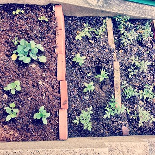 garden: week 1