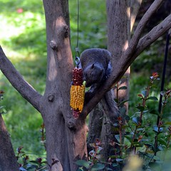 primate(0.0), koala(0.0), gorilla(0.0), ape(0.0), animal(1.0), branch(1.0), zoo(1.0), tree(1.0), nature(1.0), mammal(1.0), fauna(1.0), wildlife(1.0),