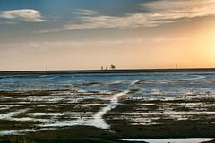 paisagem-do-banhado-D-850-_Snapseed