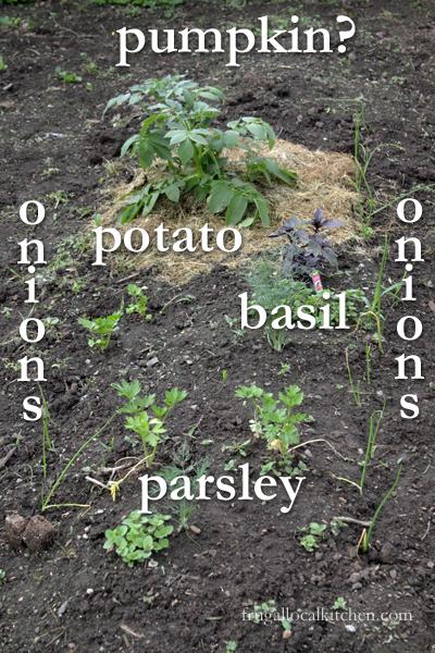 kids-garden-planted-1
