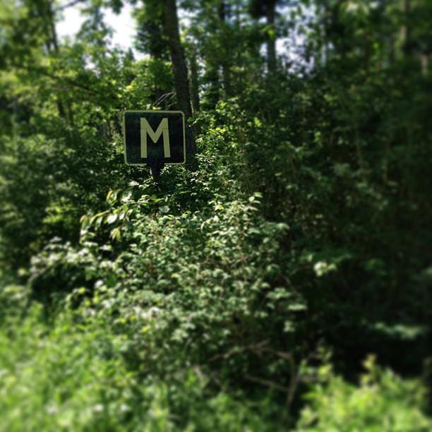 Mitt i skogen finns en plats för möte. Mellan mig och dig.