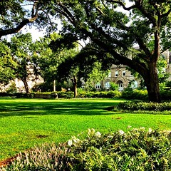 Gibson Hall on the academic quad #tulane #onlyattulane