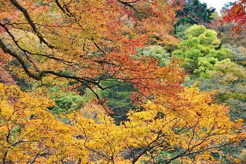 【写真】2012 紅葉 : 貴船神社/2019-02-06/IMGP5935