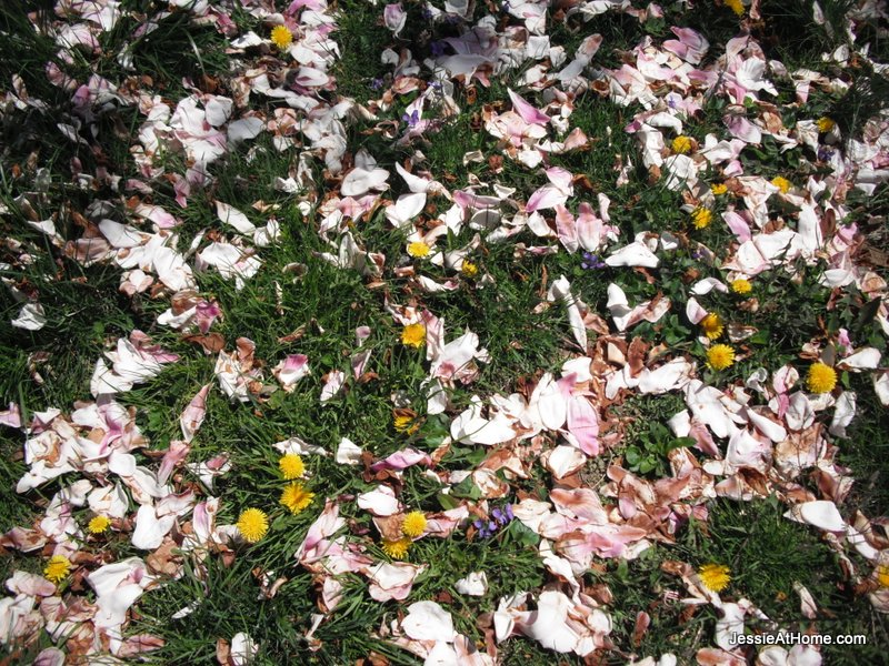 Magnolia-Droppings