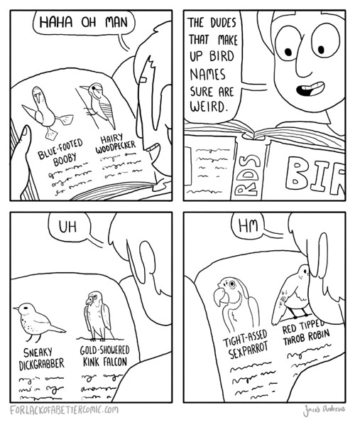 burds