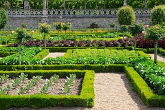Vegetable gardens at Villandry