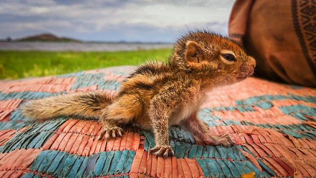 baby animal