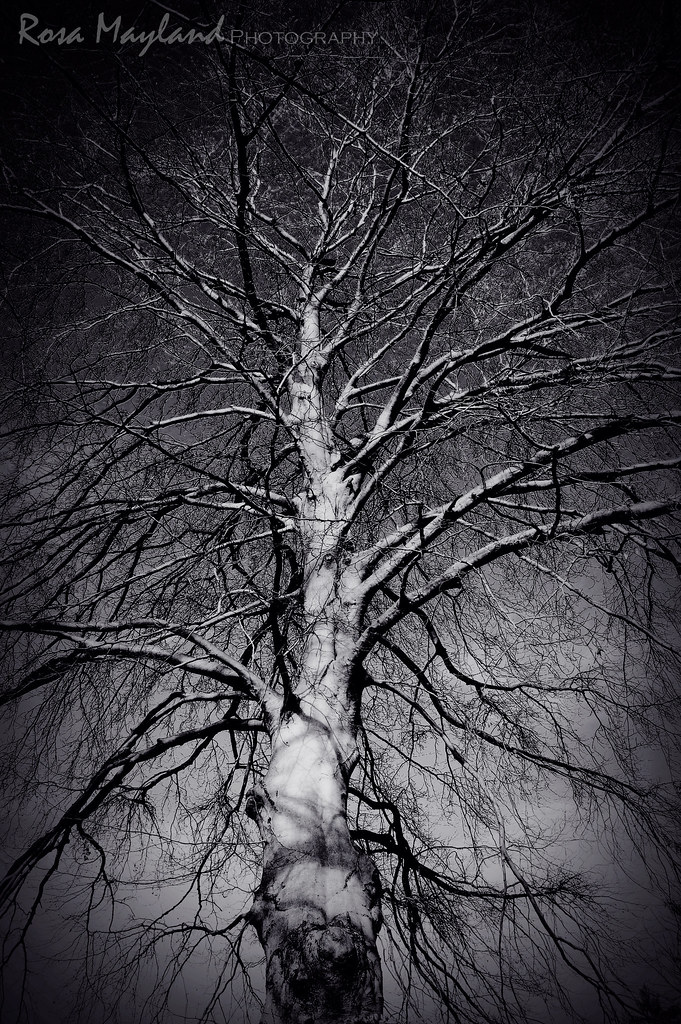 Dead Tree 1 7 bis